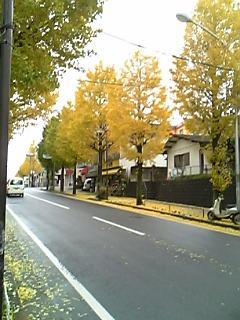 Image817.jpg
