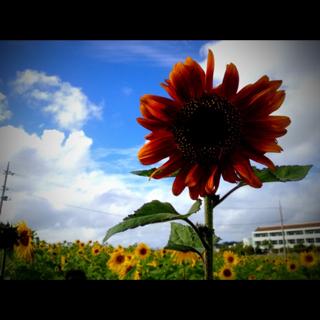 image-20130227153518.png